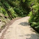 西山登山口より先の林道の画像
