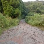 基山登山口への林道の画像