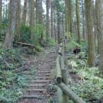 若杉山頂へ続く登山道の画像