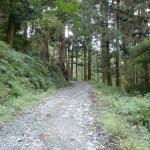 若杉山頂へ続く林道の画像