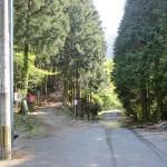 犬ヶ岳登山口-左の道がウグイス谷コース、右のコースは恐渕コースの画像