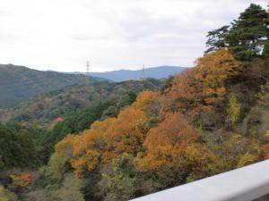油山登山道の吊橋から見る紅葉の画像