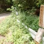 矢筈岳登山口(水俣市の矢筈林道入口)の画像
