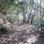 善應寺の先の林道の画像