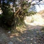 灘山ハイキングコース(左回り)入口手前の分岐2の画像