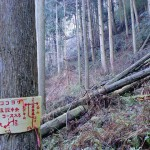 司書橋コース迂回路の標識の画像