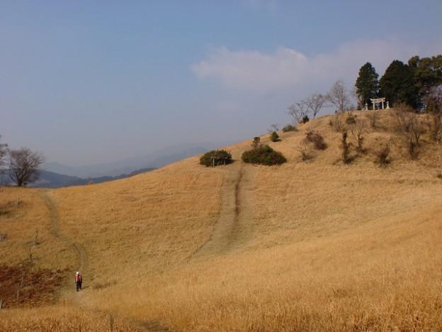 杓子ガ峰山頂の草原の画像