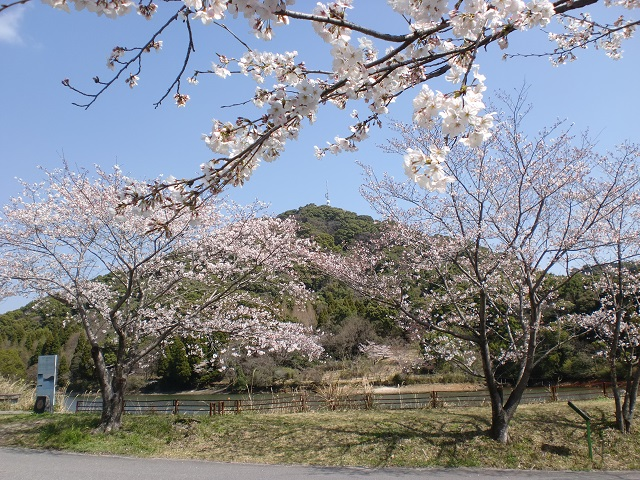 日ノ沢池の桜並木から見る日ノ隈山の画像