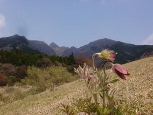 大戸尾根登山口から見る根子岳とオキナグサの画像
