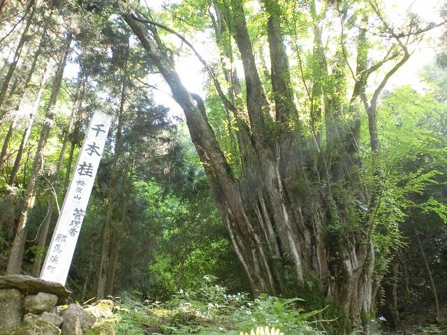 桧原山の登山口 正平寺と千本桂にアクセスする方法※中津発着