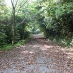 権現山山頂に続く林道(下天草)の画像