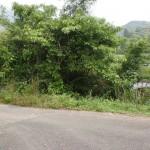 頭岳登山口への林道を示す標識の画像