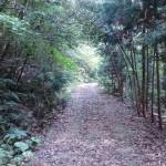 頭岳登山口に続く荒れた林道の画像