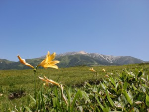 折立登山道から見る薬師岳の画像