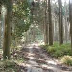今村集落から岳滅鬼山登山口へ続く林道の画像
