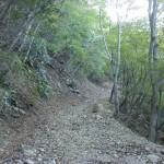 木浦鉱山千人間府へ続く登山道(林道)の画像