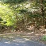 天神原山の登山道入口(林道終点地点)の画像