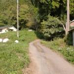 中村バス停から花牟礼山登山口へ続く小路の画像