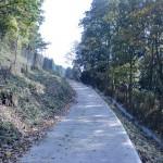 高崎山登山口に続く林道の画像