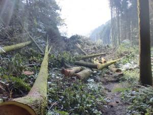 伐採した後のスギやヒノキの画像