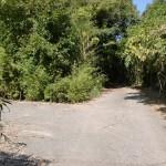 県道31号線から鷲巣岳登山口に至るまでの最初の林道分岐の画像