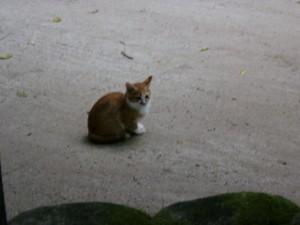 天拝山の御自作天満宮の子猫の画像