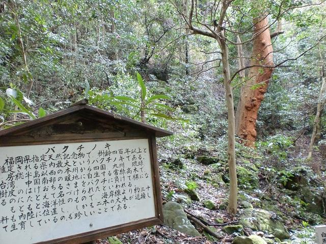 大法山・白馬山の登山口 安国寺と梅林公園にアクセスする方法