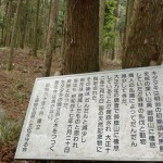御岳登山口への林道沿いにあるキタタキ生息の跡の画像