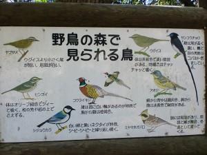 木坂野鳥の森でみられる野鳥の案内板の画像