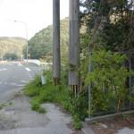 緒方入口バス停(対馬交通)の画像