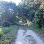 姫神山砲台・多功崎砲台に通じる旧軍道の画像