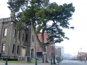 街道松(長崎街道・大里宿)の画像