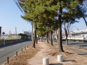 長崎街道・赤坂海岸(高浜)の松並木の画像