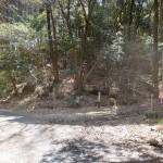 岸岳登山道入口(林道浅井谷線終点側)の画像