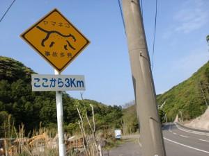 ツシマヤマネコ飛び出し注意の標識の画像