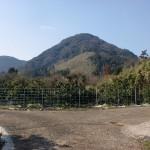 両子山登山道入口手前のミカン畑の分岐の画像