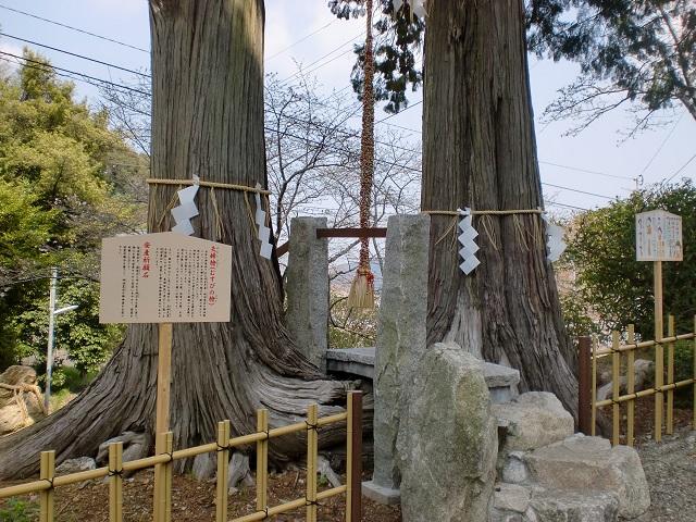 武雄神社の夫婦檜の画像
