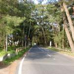 虹ノ松原駅前の国道203号線に至る車道の画像