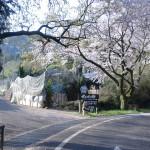 鏡山の山頂へ向かう車道から脇道へ入る個所の画像
