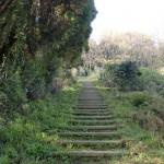 鏡山のひれふり展望台(東展望台)コースの階段状の登山道の画像