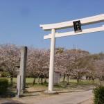 鏡神社の白い大鳥居(唐津市)の画像