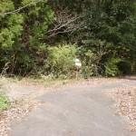 屏風岳登山道入口手前の林道分岐地点の画像