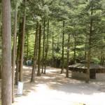 県民いこいの森キャンプ場のテン場の画像