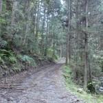 戸祇御前山登山口へ続く未舗装の林道の画像