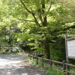 吾川スカイパーク横の大山祇神社のトチノキ前の画像