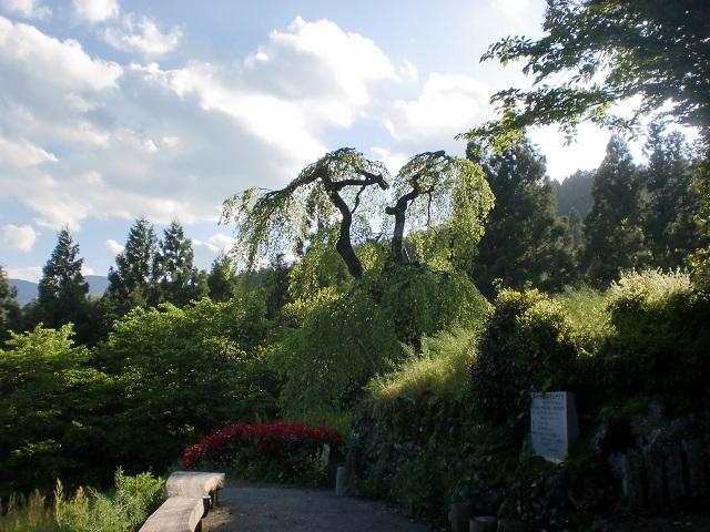 中津明神山の登山口 大宮八幡神社としだれ桜にアクセスする方法