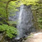 林道梅ヶ谷永子線の道路沿いにある名無しの滝の画像