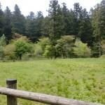 風穴・上林森林公園のキャンプ場の画像