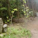 森林管理道唐谷線(林道唐谷線)にあるお地蔵さんの画像