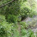 笠形山の登山道入口(中通側)の登山道